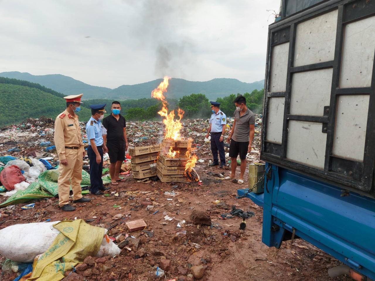 Cục QLTT Quảng Ninh: Tiếp tục phát hiện, thu giữ, tiêu hủy hàng nghìn con gia cầm giống không rõ nguồn gốc xuất xứ